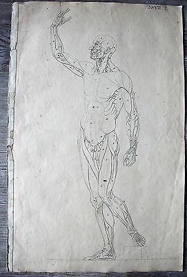 Antique Pen and Ink Drawing Muscles, Anatomy Around 1800 VERY RARE