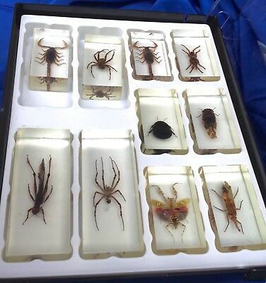 10 PCS Vintage SCORPIONS / SPIDER/ BUGS in LUCITE PAPERWEIGHT educationSouvenir