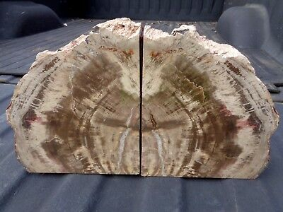 Stunning Vintage Set of Arizona Petrified Wood Bookends Cut Log Branch
