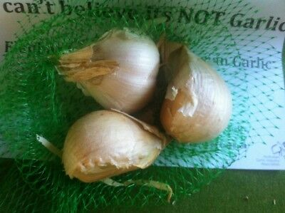 Garlic - elephant/russian/giant medium sized cloves - Certified Organic 800gm