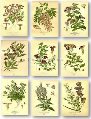 FLORAL VINTAGE BOTANICAL Book Plate Illustrations Art 8X10 Prints SET OF 9