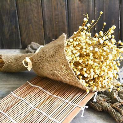 Pressed Bunch of Flowers with Branches Real Natural Dried Rare DIY Floral Decor^