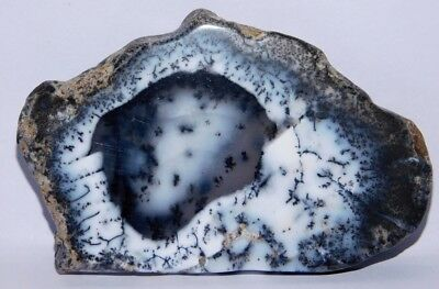 163cts.NaturalRoyal Dendrite Opal Agate Plate Rough Cabochon Loose Gemstone 4202