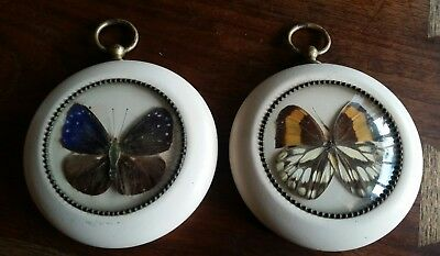 Lot of 2 Vintage Round Framed PRESSED BUTTERFLIES Wall Hangings