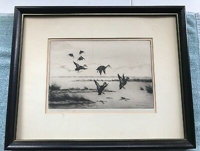 "ANTIQUE Original Signed & Dated 1921 Duck Bird Etching By PC Wharton 15""x 12"""