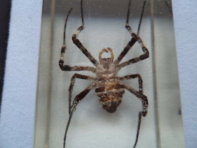 """Real Life """" Bugs and Insects """" Educational - Natural History Taxidermy Lot 1"""