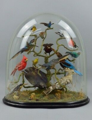 Antique Victorian Taxidermy Bird Display, Glass Dome