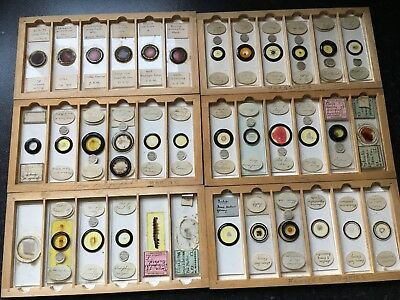 Collection of 126 Antique & Vintage Microscope Slides, wooden case