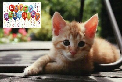 Cute Kitten Wishes HAPPY BIRTHDAY Cat Animal Balloons Etc Modern