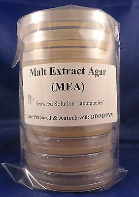 Malt Extract Agar (MEA)   10, 100mm x 15mm Sterile Plates- Great For Mushrooms!