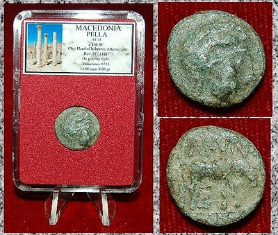 Ancient GREEK Coin MACEDONIA PELLA Helmeted ATHENA On Obverse OX On Reverse