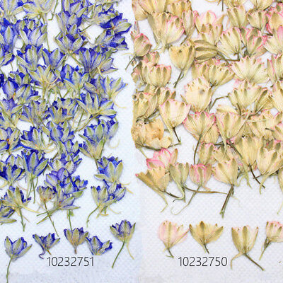 Thousands of birds to spend Pressed nature Flower Dried jewelry 12pcs 102327