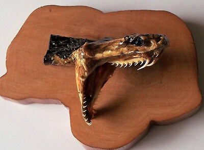 Ending 7/21 >>Taxidermy Cottonmouth Snake Head Mounted On Cypress