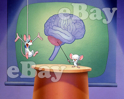 Rare! PINKY AND THE BRAIN Cartoon Color Photo WARNER BROS ANIMATION Animaniacs