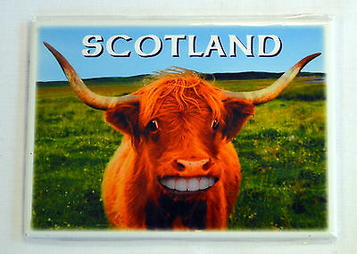 SCOTTISH HIGHLAND CATTLE design FRIDGE MAGNET,  Scotland,