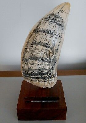Authentic Sperm Whale Tooth Scrimshaw Not A Reproduction