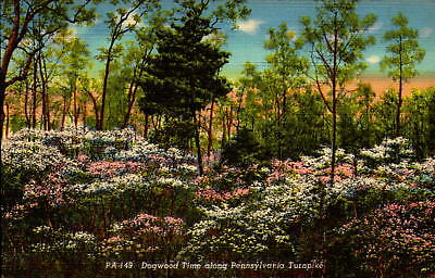 Postcard Dogwood Time along Pennsylvania Turnpike  Linen Unused
