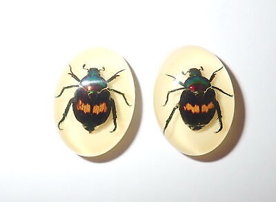 Insect Cabochon Fortune Beetle Oval 18x25 mm on white bottom 2 pieces Lot