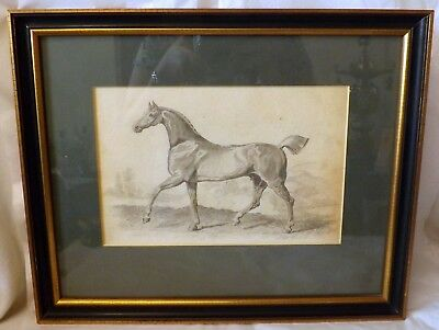 19th Century Pencil Sketch of a Thoroughbred Racehorse in a Landscape, Framed