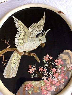 Antique Vintage hand embroidered Silk Picture Cockatoo Bird Cockatiel Framed