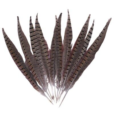 3X(Beautiful Rooster Tail Feathers 12-14 Inch Color:Natural Color QTY:10 PC S5V1