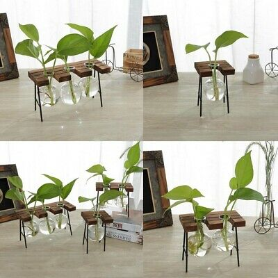 Tabletop Decor Beaker Glass Hydroponic Vase Flower Plant Pot with Wood Tray