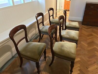 antique mahogany dining chairs, late 19th century, solid bases