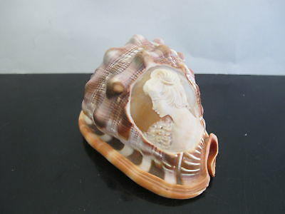 Vintage Carved CAMEO Lady Portrait Conch Helmet SEASHELL
