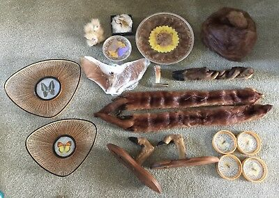 Job Lot Of Taxidermy And Curios Antiques Bat Butterflies Fur
