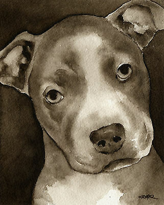 Pit Bull Puppy Art Print Watercolor Painting by Artist DJR