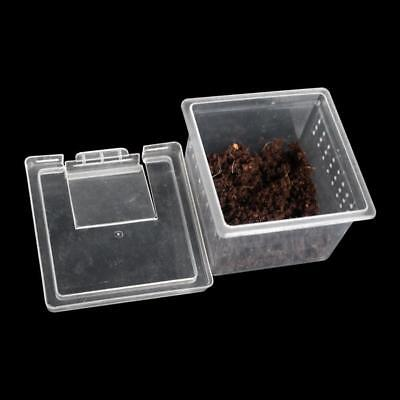 Transparent Plastic Box Insect Reptile Transport Breeding Feeding BasinG