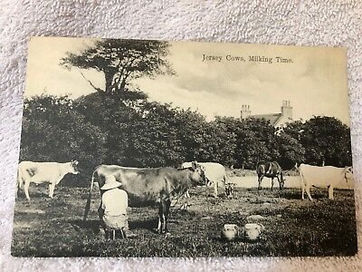 Real Photograph Postcard Jersey Cows Milking Time