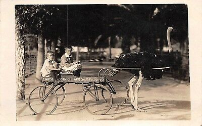 Pasadena, CA-Boys Riding in an Ostrich Pulled Wagon-Real Photo Postcard