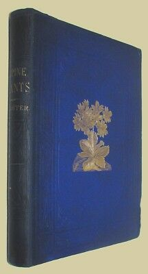 David WOOSTER. ALPINE PLANTS: Figures and Descriptions 1872. First edition