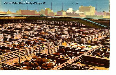 Union Stock Yards-Cattle in Pens-Factories-Chicago-Illinois-Vintage Postcard