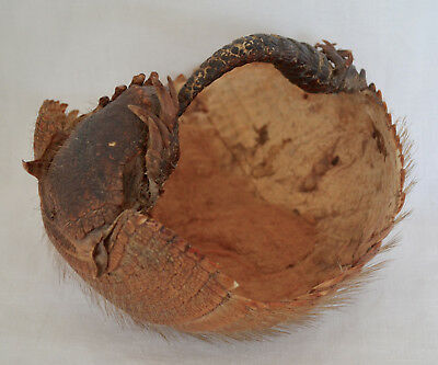 Antique Real Armadillo Sewing Basket Taxidermy Curiosity