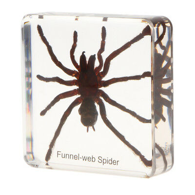 Tarantulas Insect Specimen Collectible Kinder Spielzeug Handwerk Display