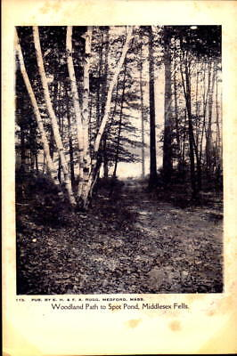 Postcard Woodland Path to Spot Pond Middlesex Fells