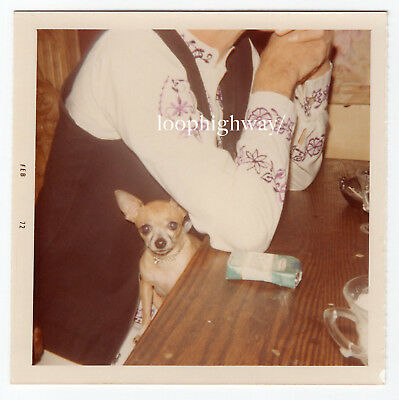 Chihuahua DOG Tucked Under Out of Frame Headless Figure Cigarettes Vtg Old PHOTO