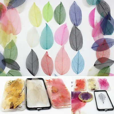 10/100pcs Natural Dried Flowers Leaves Veins Handmade Accessory Decor DIY