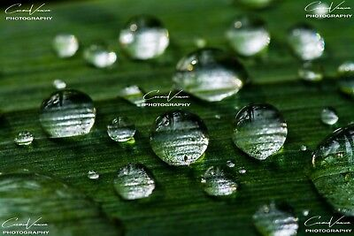 "JPG ""DEW"" Digital Image Photo Wallpaper Desktop Screensaver Relaxing"