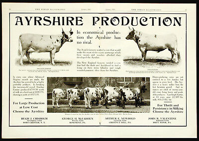 1915 AYRSHIRE DAIRY COWS Farm Cattle 2-Page PHOTO Vtg Agriculture Farm Print AD