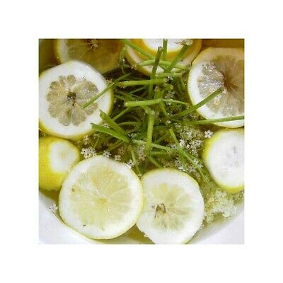 LIME, COCONUT & ELDERFLOWER Reed Diffuser Oil + 10x FREE STICKS! Refill your Dif