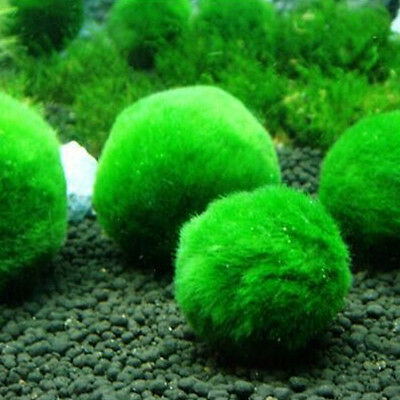 4-5cm Mini Green Marimo Moss Plant Balls Aquarium Fish Tank DIY Decoration Acc