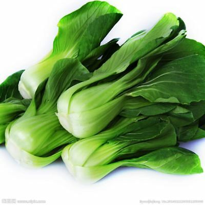 Pak Choi Bok Choy Chinese Cabbage Seeds Vegetable Seeds Easy To Grow 200 Particl