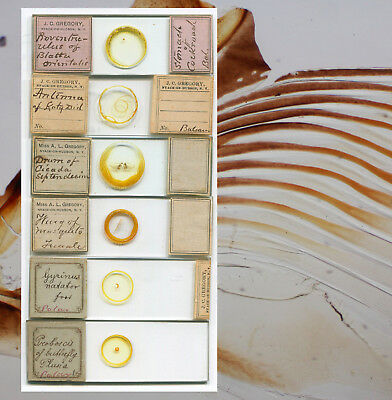 6 Insect Microscope Slides by James C. and Ada L. Gregory, of Nyack, New York