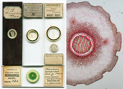Zabriskie, Flatters, etc. Microscope Slides - 4 Botanical Preparations