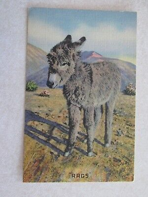 A419 Vintage Postcard Rags the donkey mule I want my Mama