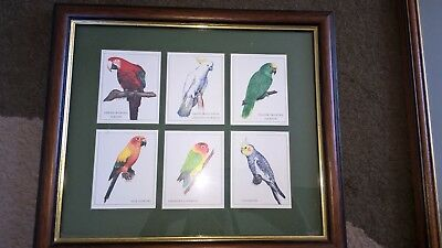 """Cardlynx Framed Parrot picture 6 different parrots wood frame 12"""" x 10.5"""""""