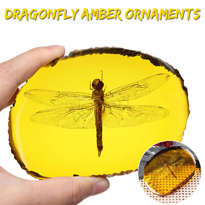 Dragonfly Amber Insects Manual Polishing True Insect Specimens Collection Decor